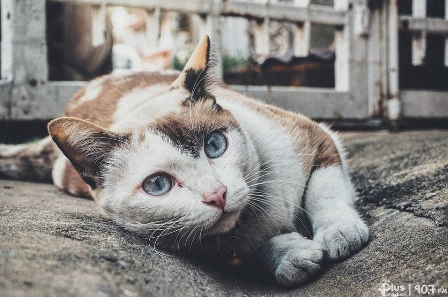 d224974d60c55e Pomóż kotom przetrwać zimę Radom - Radio Plus Radom